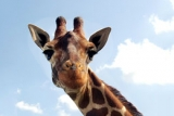 See the animals at Africa Alive Adventure Park and Zoo