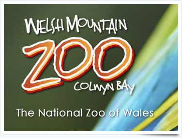 Visit Mountain Zoo for interesting things to do in Prestayn
