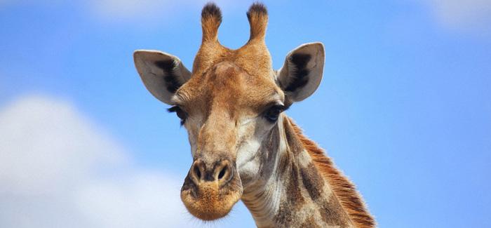 Visit Africa Alive Adventure Park!
