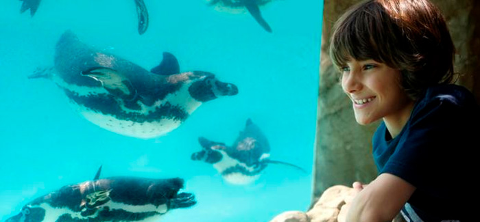 Visit the Penguins at Drusillas Park!