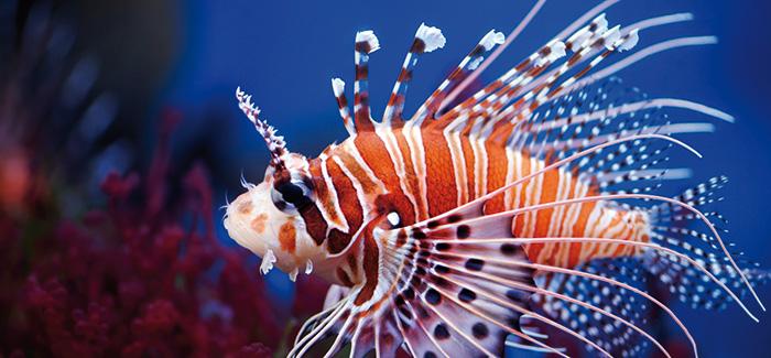 Visit the SeaQuarium in Rhyl!